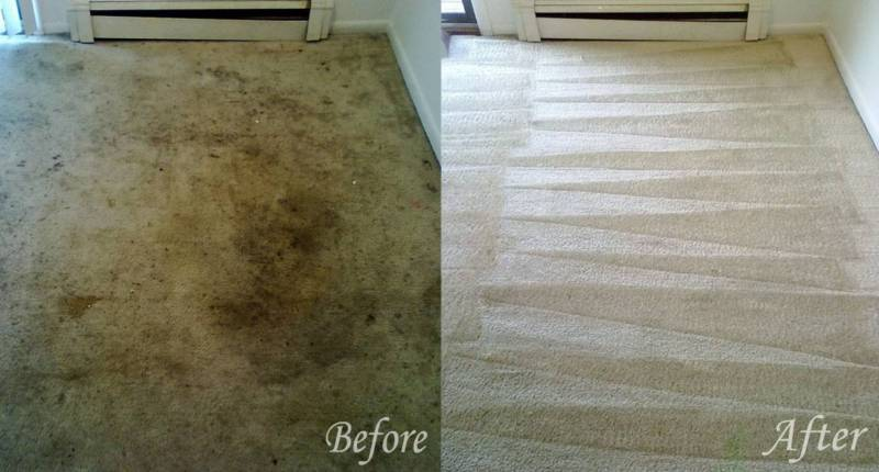 Carpet Steam Cleaning Mudgeeraba