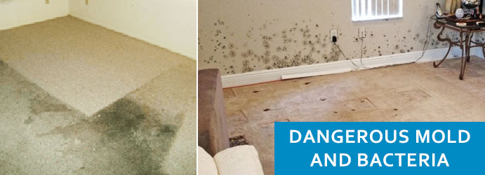 Remove Mold and Bacteria Melbourne